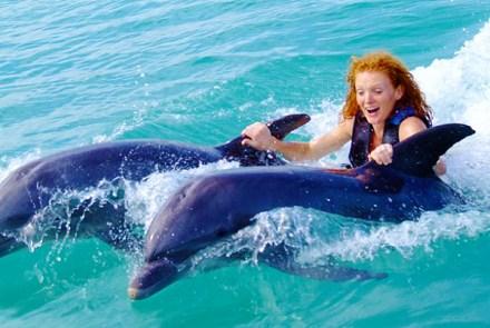 Dolphin Encounter Program from Negril | Book Jamaica Excursions | bookjamaicaexcursions.com | Karandas Tours