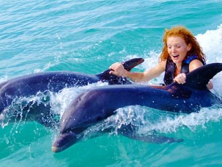 Dolphin Encounter Program from Negril   Book Jamaica Excursions   bookjamaicaexcursions.com   Karandas Tours