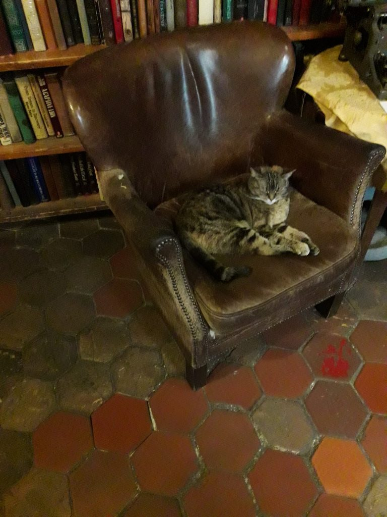 Residential Cat at Shakespeare and Company
