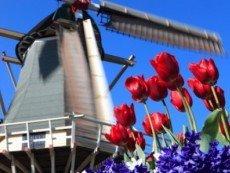 В Нидерландах будут работать иностранные игорные холдинги