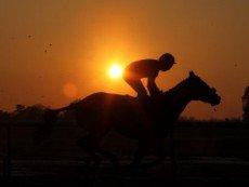 Жокей и его лошадь