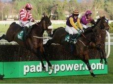 Никто из Paddy Power не смог насладиться скачками в эти выходные
