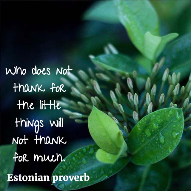 Estonian Proverb: The Little Things
