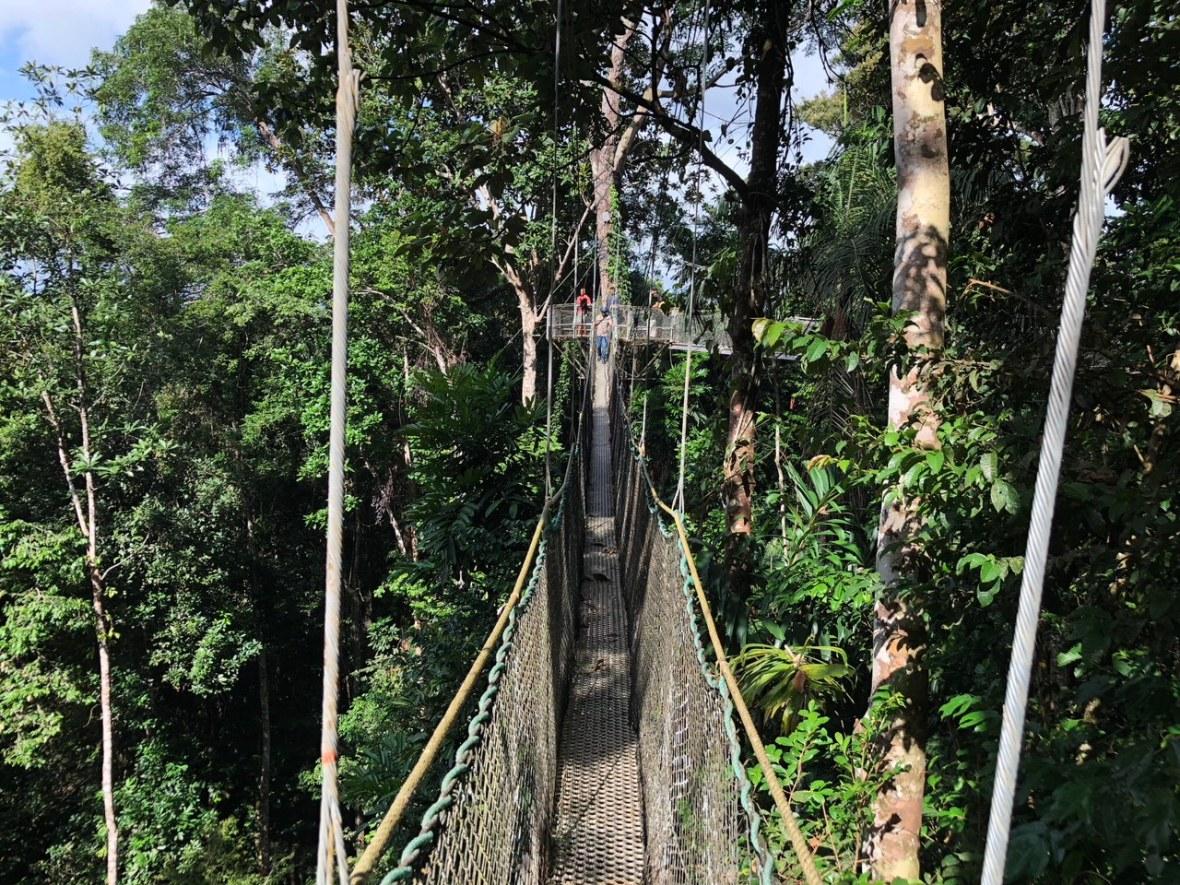 Iwokrama Canopy Walkway 4