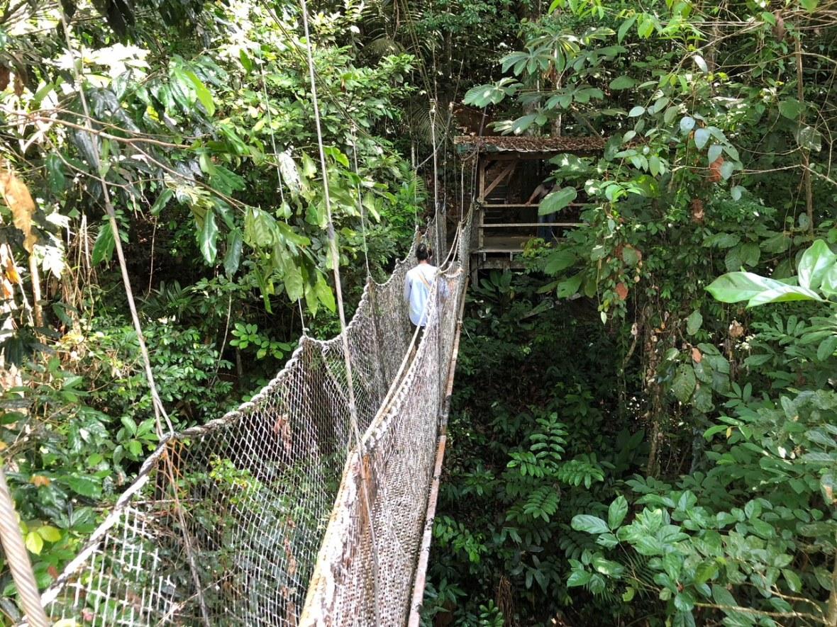 Iwokrama Canopy Walkway 5