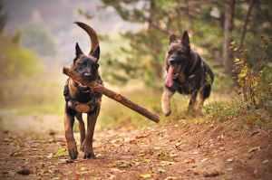 Dog training with sticks