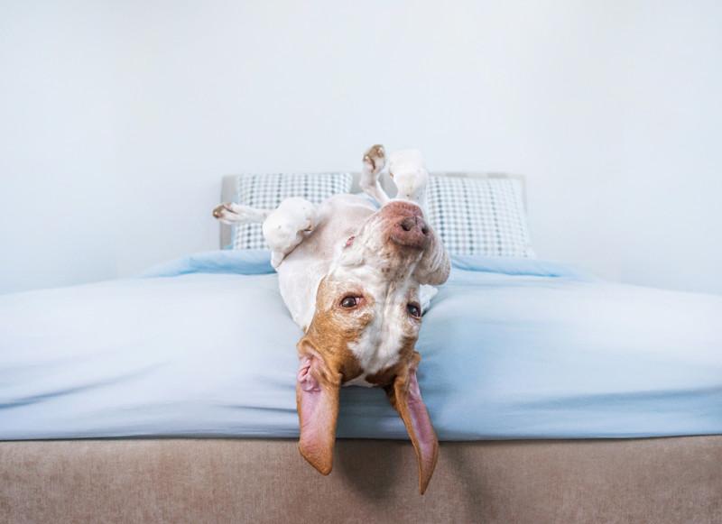 upside down dog pose