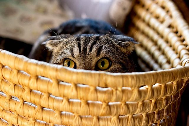 Hide Them In Plain Sight (Cat Photography Tips)