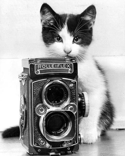 Always Have Your Camera Ready (Cat Photography Tips)