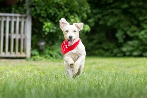 Burst Mode Photos (Dog Portraits from Photos)