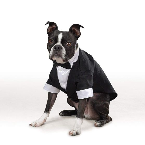 Gentleman Themed Dog Costume Ideas
