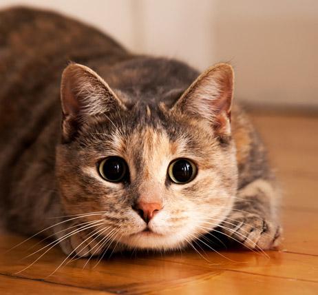 An Anxious Cat