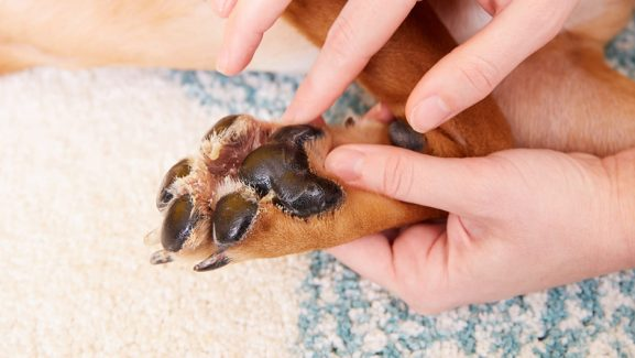 The Healthy Dog Feet