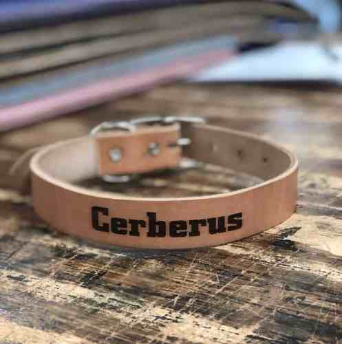 Dog Collars to Travel with a Dog