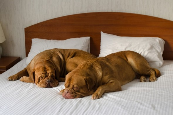 Dogs and Hotels
