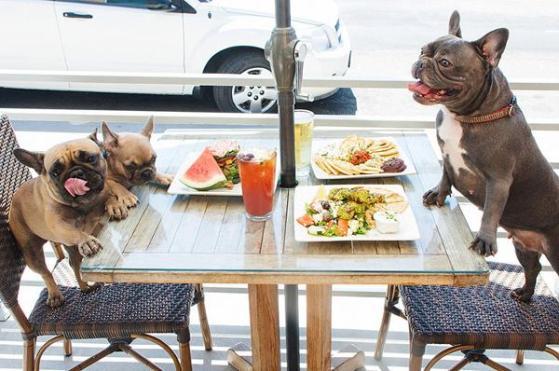 Pet Friendly Cafe Dates