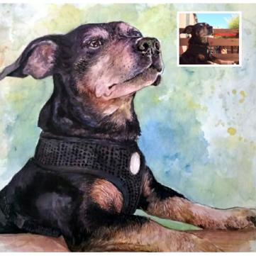 Watercolor Pet Portraits