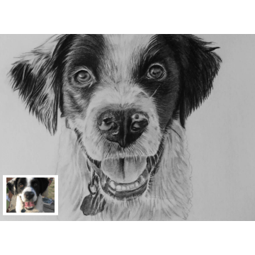 Pet Pencil Sketch