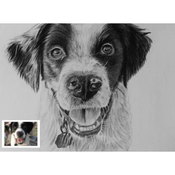 Pet Pencil Sketch