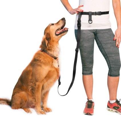 Choose a collar and leash - Leash Train a dog