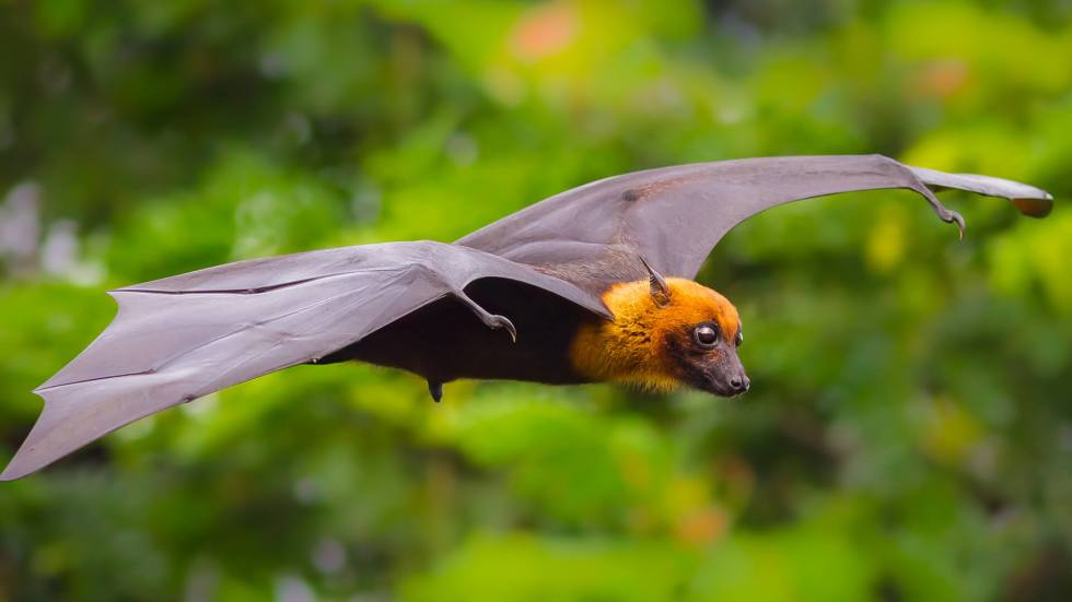 animals hero bats