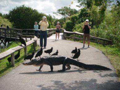 Everglades National Park wildlife viewing