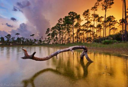 Long Pine Key, Everglades National Park