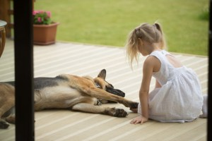 The diary of a dog who had a pet human