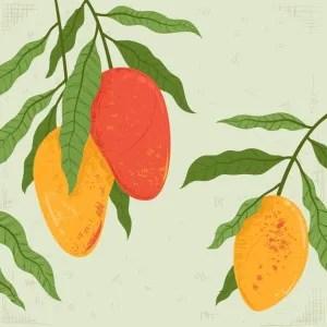 Food wars - Mango versus knife