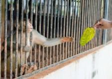 Animal Story – The Zoo's Missing Rhino | Bookosmia