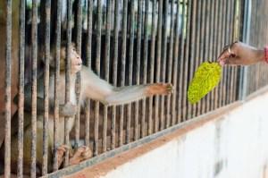 Animal story - The zoo's missing rhino