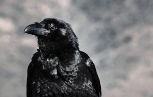 crow story folktale