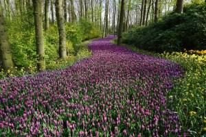 flowers seasons bookosmia