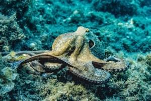 Seaworld - What are underwater animals like?