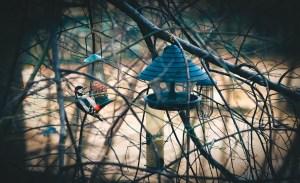 Bird watching - Beck Petrel - Life in a bird sanctuary