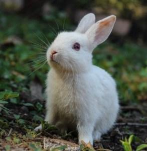 Good samaritan - The bunny rabbit's kindness