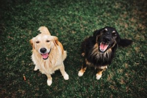 International dog day - If dogs could talk
