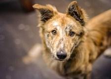 Stop Animal Cruelty – Be Kind To Stray Dogs | Bookosmia