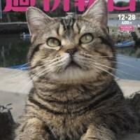 『週刊朝日』12月28日号 昨年売り切れ続出した丸ごと一冊ネコ特集が今年も!連載、人生相談、書評欄までネコづくし!