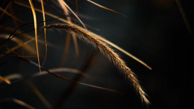 Bend like a reed, do not resist like an oak