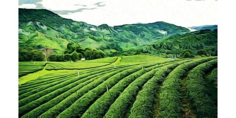 Ondaa - An Assamese folk tale about Assam's tea tribes and ghosts