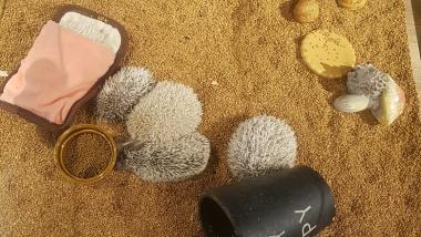 Harry's Tokyo Hedgehogs