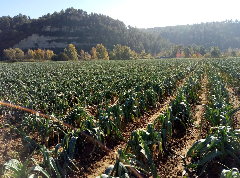 A Visit To the Aneto Factory in Cataluña + A Pumpkin Risotto Recipe (Vegetarian)