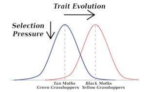 The bell curve, or a 'Gaussian distribution', moves left and right in response to selective pressure