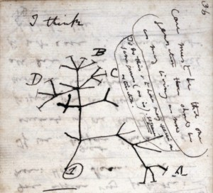 A page from Darwin's notes, with a tree-like branching diagram of relationships among living things.