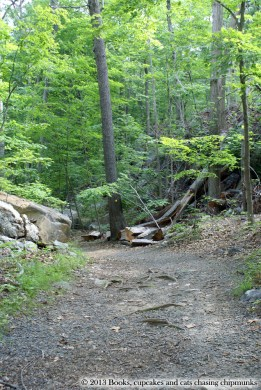 Cranberry Lake Preserve - White Plains, NY - June 2013 | Books, Cupcakes, and Cats Chasing Chipmunks