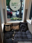 Crumbs & Whiskers Cat Cafe - Washington, DC | Books, Cupcakes, and Cats Chasing Chipmunks