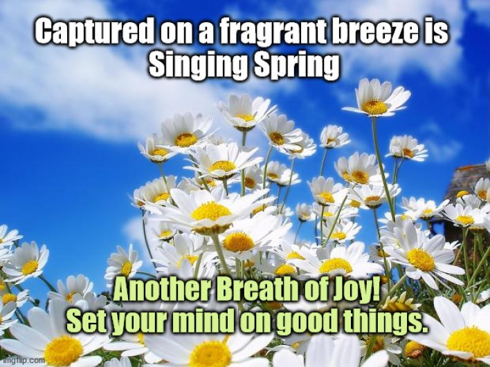 daisies and sky breath of joy