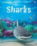 0000793_sharks_il_discovery_300