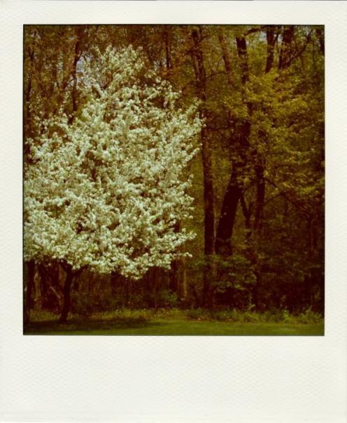 spring2-polaUSE